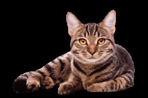 our-cat-shop-image